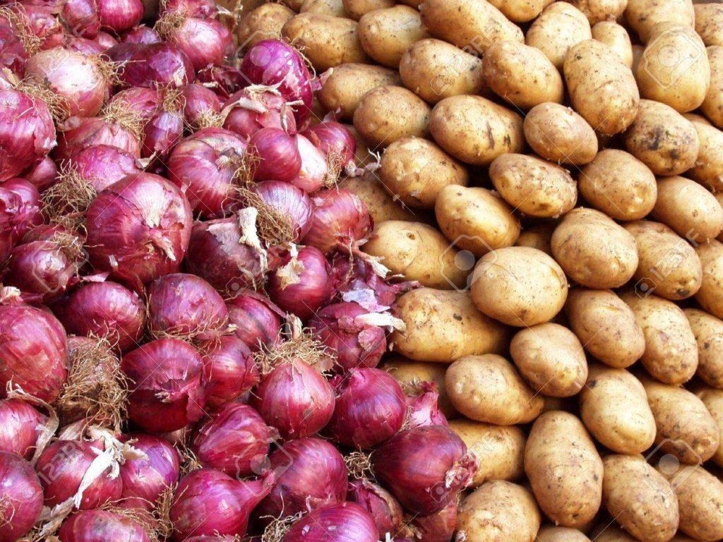 potato onion