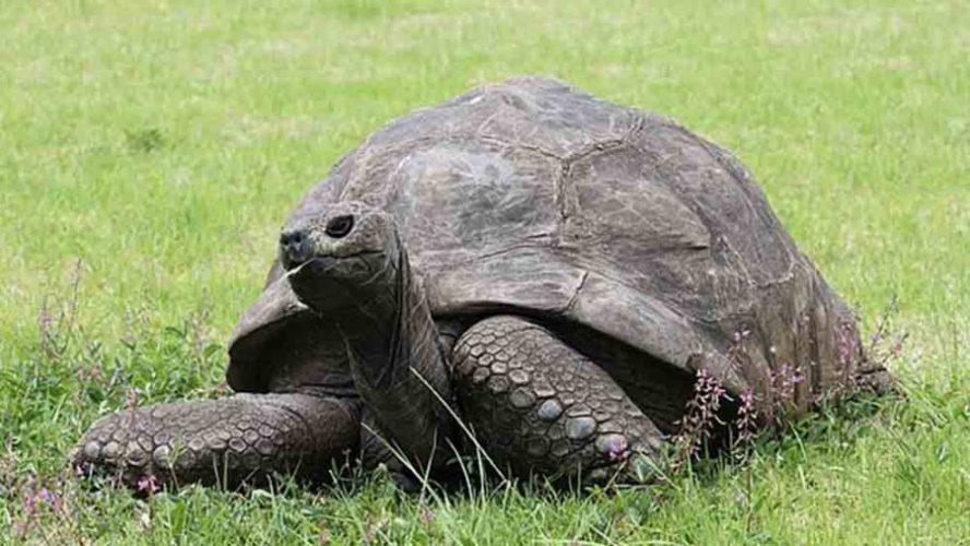 tortoise scaled