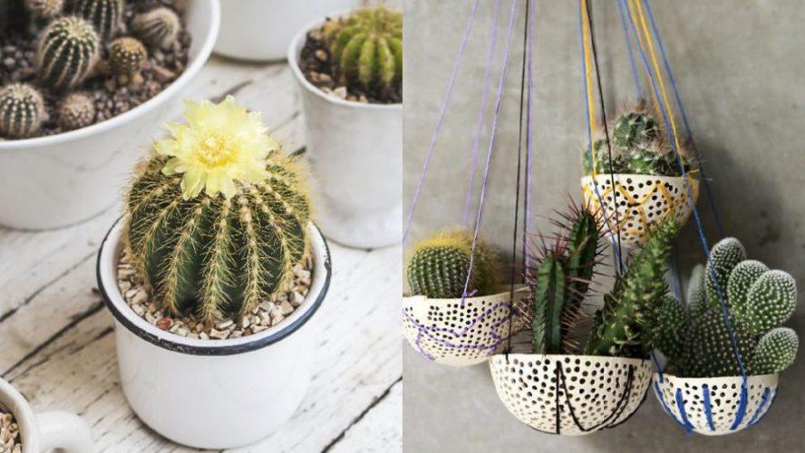 cactus scaled