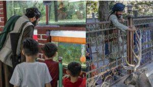 talib zoo